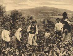HISTORIA DEL VIÑEDO EN MONDÉJAR (III parte)
