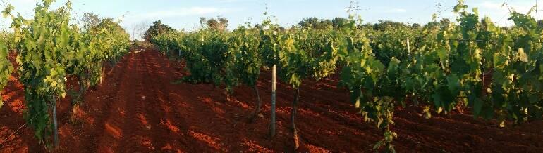 Escenario de la viticultura