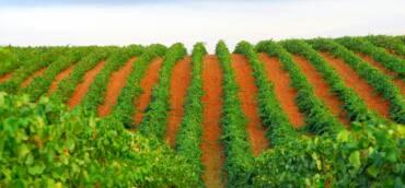 Origen aproximado del viñedo