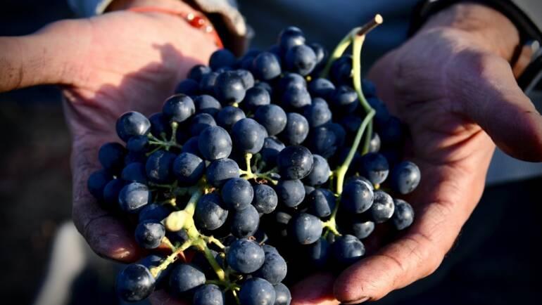 El nivel sociocultural del vino